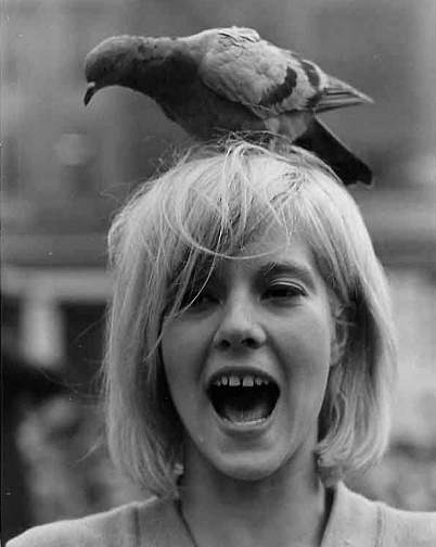 photo Sylvie Vartan telechargement gratuit